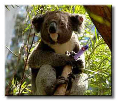 A koala was sitting in a gum tree, smoking a joint...