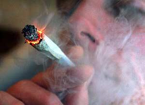 Den här bilden kommer från en engelsk upplysningssida om cannabis (klicka!)...