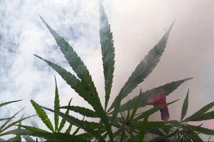 Politiska krafter vill tillåta laglig försäljning av cannabis i Köpenhamn.