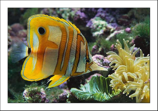 Fräck fisk i Dagens MOI-illusion