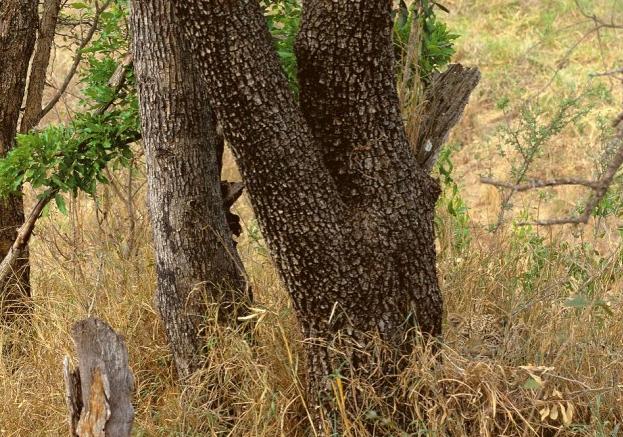 Hidden Predator